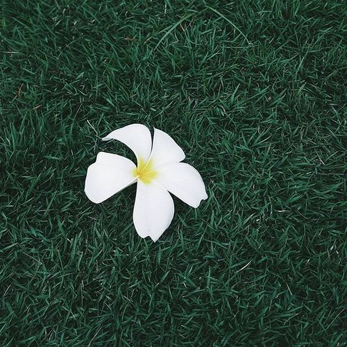 | 🌿 🌼 🌿 ☝ | You said my sadness was like the sun, beautiful from a distance but it hurt you too much to come closer. -- Lang Leav. VSCO Vscocam Vscovietnam Vscoflowers Flower Vietnam Hometown Streetphotography Street Country Countryside Grass Green White Fresh Plant Morning Road Love Cool Photooftheday Photos Tb View Ontheroad nature fresh instadaily instagood instamood