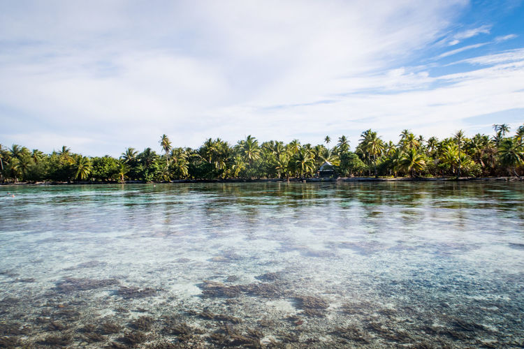 view over a coral garden near tahaa French Polynesia Palm Tree Tahaa Travel Beauty In Nature Cloud - Sky Coral Garden Day Growth Idyllic Nature No People Non-urban Scene Outdoors Pacific Ocean Plant Scenics - Nature Sea Sky Tranquil Scene Tranquility Tree Water Waterfront The Traveler - 2018 EyeEm Awards