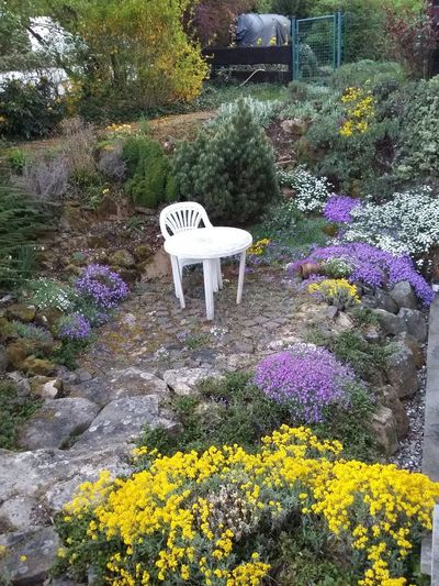 In A Moment Of Peace A View From My Window My Garden Beauty In Nature Growth Freshness Plant Purpleflower Yellow And Green Pure White Spring Stay Forever!