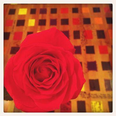 Love Roses Wonderfulworldofclaire