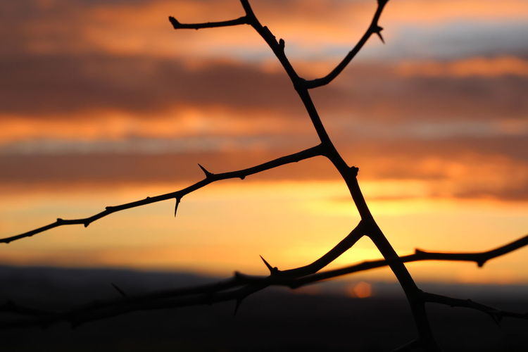 Close-up of silhouette branch against sky during sunset