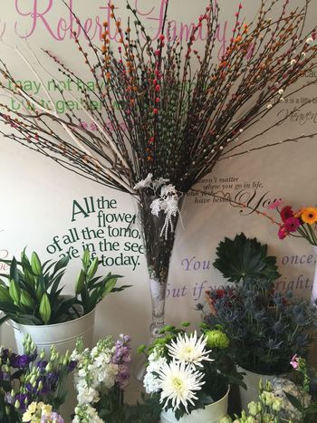 Beauty In Nature Blooming Cheshire Cheshirelife Colourful Colours Daisies Davenham Decoration Display Flower Flower Arrangement Freshness Growth Leaf Lily Multi Colored Nature No People Petal Plant Text Urban Spring Fever Wall Wall - Building Feature