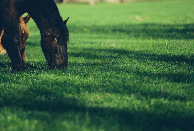 Horses grazing in a field