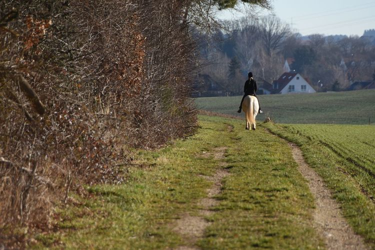 Rear View Of Person Riding Horse On Field