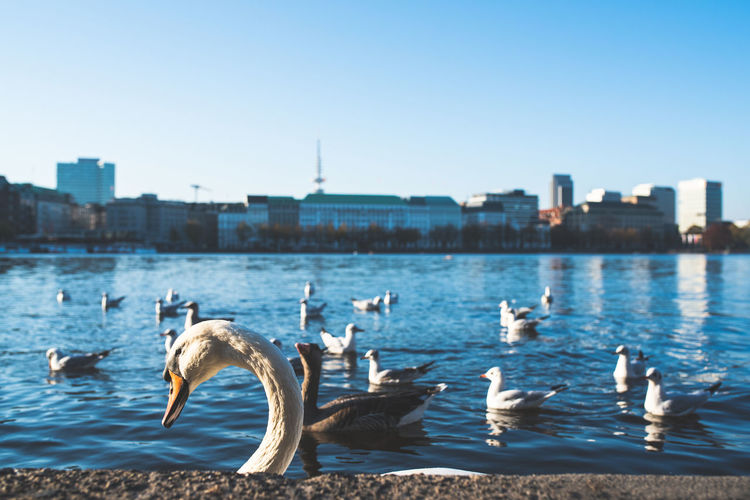 Birds in lake by city against sky