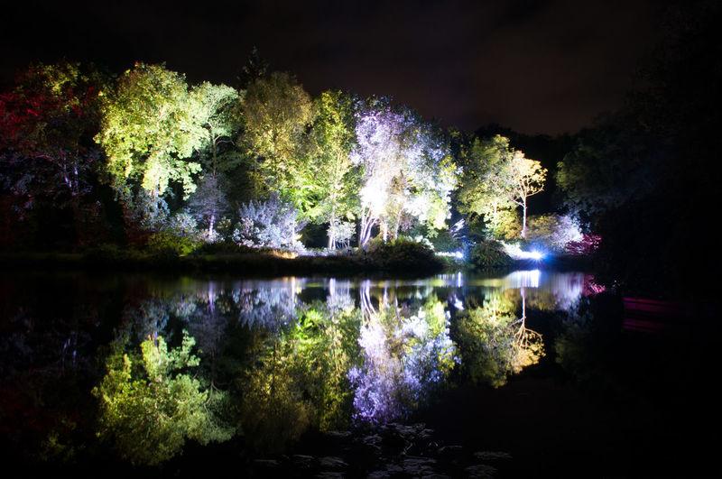 Illuminated trees in town at night