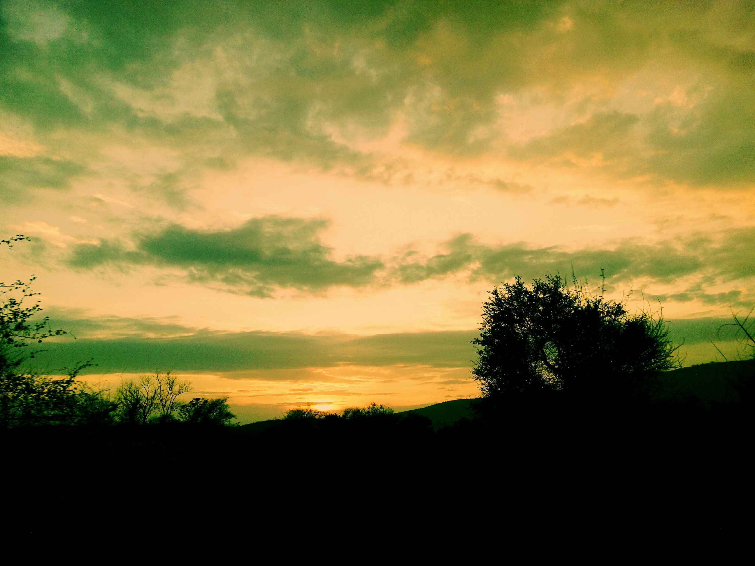 silhouette, sunset, tranquil scene, tranquility, sky, scenics, beauty in nature, tree, landscape, nature, cloud - sky, idyllic, cloud, growth, cloudy, field, dark, outdoors, dusk, non-urban scene