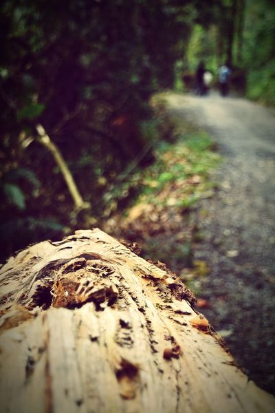Natural Wood Woodstock Forest Photography Jungle Shoot Jungle Potrait Potrait_photography Softness Outdoors Exploring Beauty In Nature Lataguri Dooars__trip