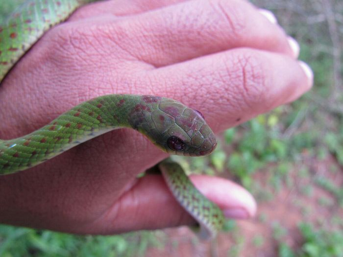 Close-up of hand holding snake