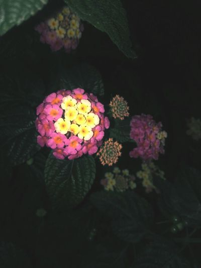 Flowers,Plants & Garden Pink Color Multi Colored First Eyeem Photo