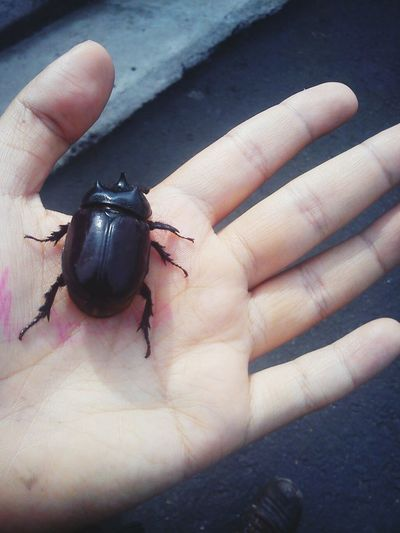 EyeEm Nature Lover Abugslife Hands Macro