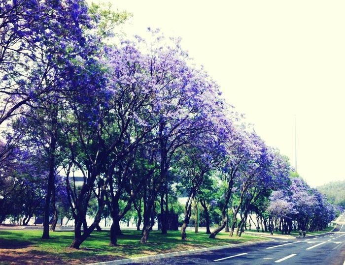 Nature Trees Scenery Mexico City