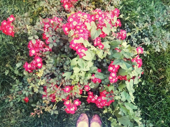 Relaxing Walking Around Pink Nature 😚