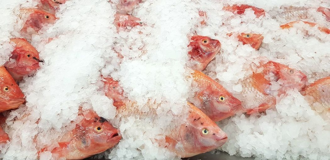 Many fresh red fish for sale Food And Drink Food Seafood Retail  Fish Cold Temperature For Sale Raw Food Market Freshness White Color Backgrounds Wellbeing Animal Full Frame Healthy Eating Ice High Angle View Vertebrate Order Sale Fishing Industry Red Fresh