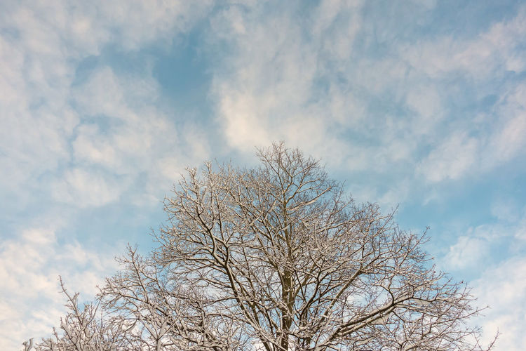 Winter Bare Tree Beauty In Nature Blue Branch Day Freshness Low Angle View Nature No People Outdoors Sky Tree