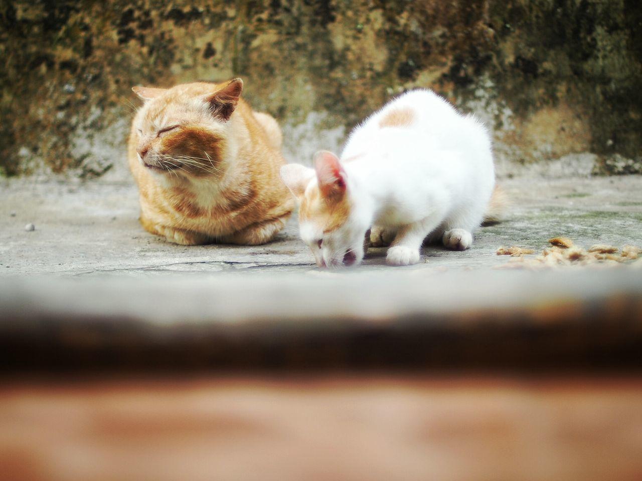 Stray Cats Feeding On Street