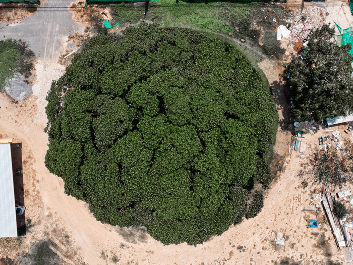 High angle view of plant growing in garden