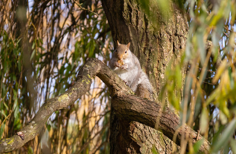 Tree Animal One Animal Outdoors Selective Focus Animals In The Wild Mammal Branch Squirrel