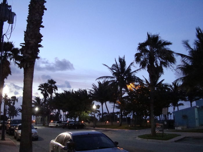 Cars on road by palm trees against sky in city
