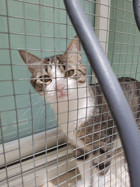 Prison Pets Trapped Feline Domestic Cat Confined Space Cage Looking At Camera Abandoned Metal