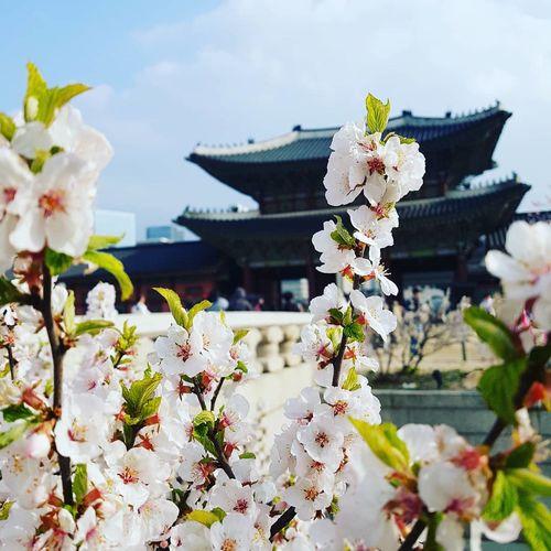 palace blossom