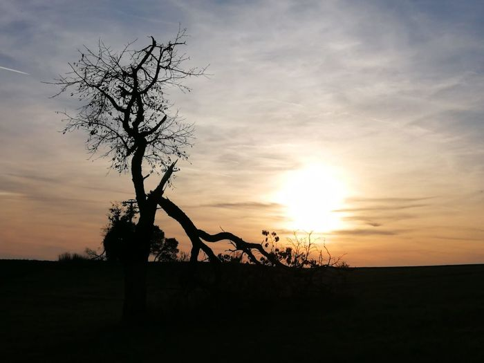 Tree Sunset Silhouette Sky Landscape Cloud - Sky