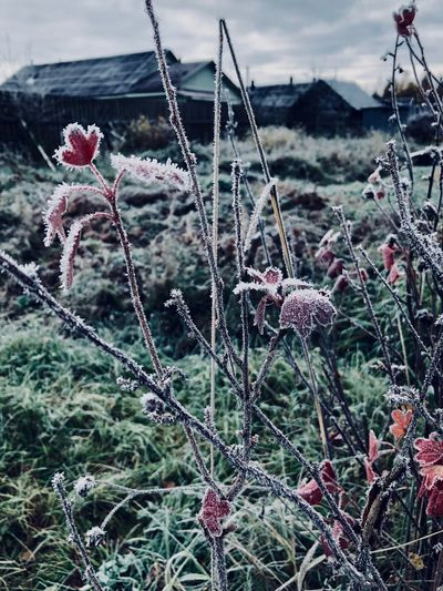 Autumn Nature Cold Temperature Day Outdoors No People Beauty In Nature First Eyeem Photo