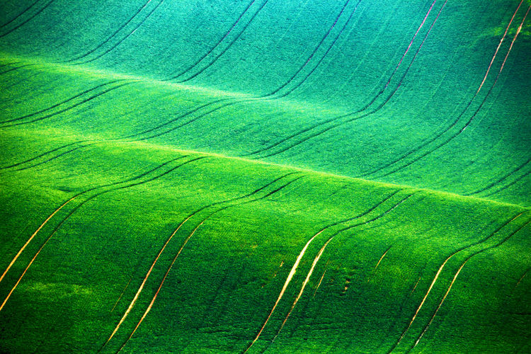 Green Color Agriculture Plant No People Growth Rural Scene Landscape Backgrounds Beauty In Nature Scenics - Nature Land Environment Field Full Frame Nature Tranquility Tranquil Scene Farm Crop  Aerial View Outdoors Layered Rolling Landscape Spring Springtime Rolling Landscape