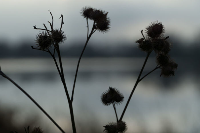 Detail view - Disteln in front of water Disteln Frozen Beauty In Nature Bokeh Close-up Cold Day Distel Focus On Foreground Growth Nature No People Outdoors Plant Sky Water
