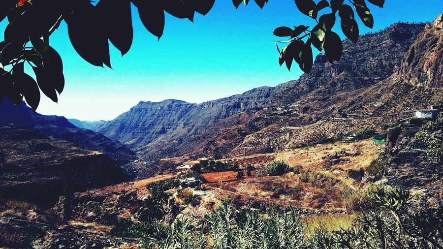 Nature No People Mountain Leaves Gran Canaria Peak Blue Sky Clear Sky SPAIN On The Road
