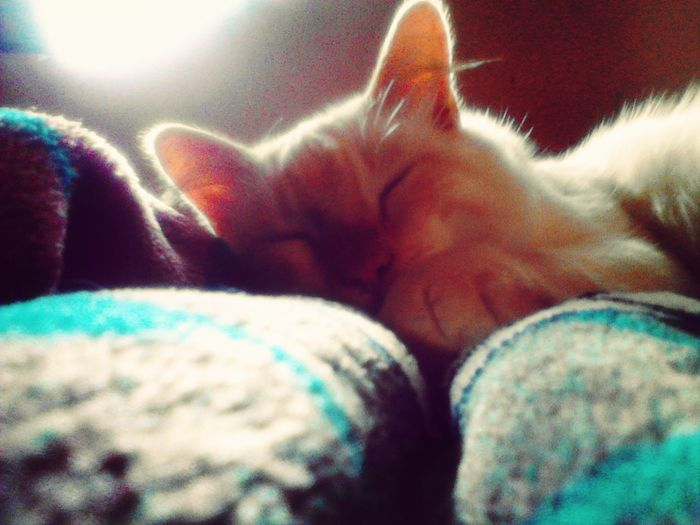 Me Cat <3 ñ.ñ