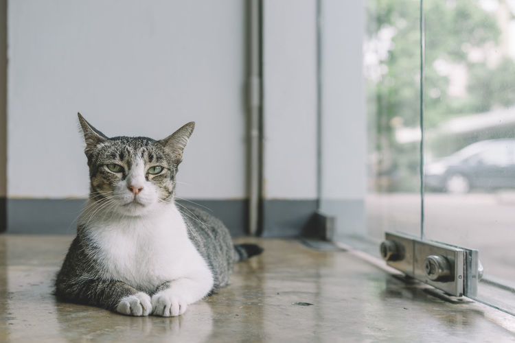 Animal Themes Cat Close-up Day Domestic Animals Domestic Cat Feline Indoors  Mammal No People One Animal Pets Portrait Sitting