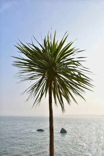 Palm Palm Tree Palm Trees ❤❤ Palms Torbay Palm Sea Sea And Sky Seascape Seaside Sea_collection Torquay Devon Simplicity Composition Rocks Symmetry Water_collection Landscape Landscape_Collection Landscape_photography Taking Photos Check This Out EyeEm Best Shots EyeEm Nature Lover EyeEm Best Shots - Landscape
