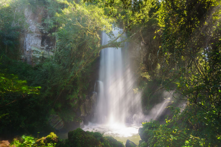 Beauty In Nature Day Freshness Growth Long Exposure Motion Nature No People Outdoors Scenics Tree Water Waterfall