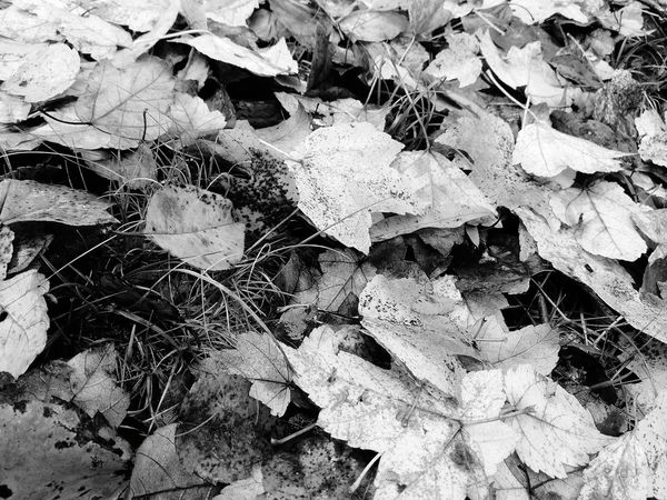 Leaf Day Outdoors Full Frame No People Backgrounds Close-up Black And White Collection  Black And White Collection  Black And White Collection  Black&white Outdoor Photography Outdoor Pictures Portrait Black And White Friday Outside EyeEm Selects EyeEmNewHere Burlington NC Freshness Drop Beauty In Nature Water Nature Black And White Collection