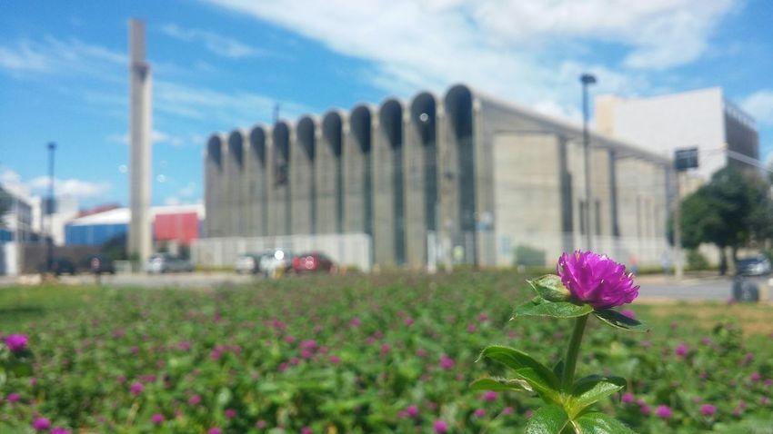 Flower Catedral Religious  Colorsplash Colors Purple Blue Sky Salvation