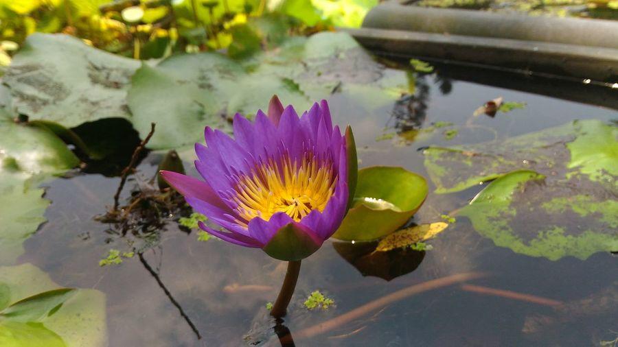 紫色的花 就是花