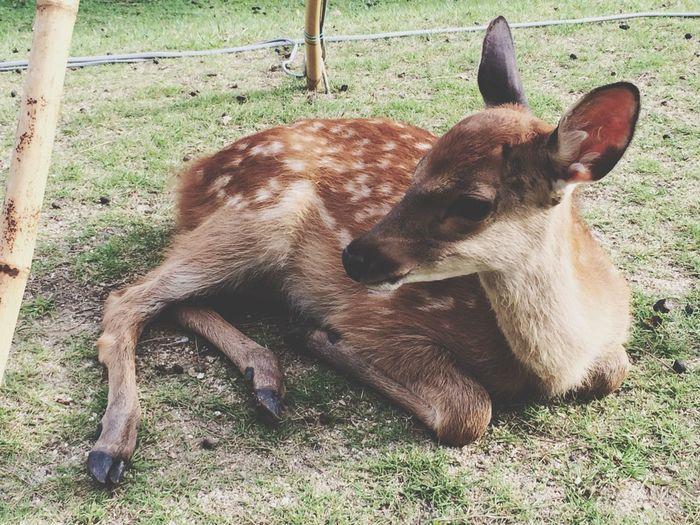 Baby Deer Cute
