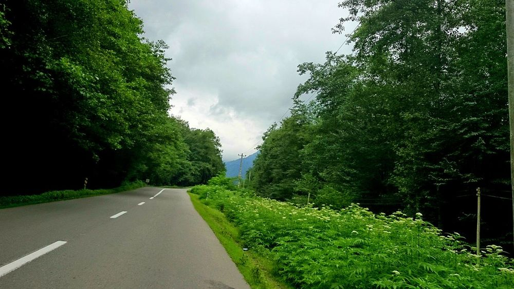 Jungle Road Iran Mazandaran Iran Mazandaran_nature