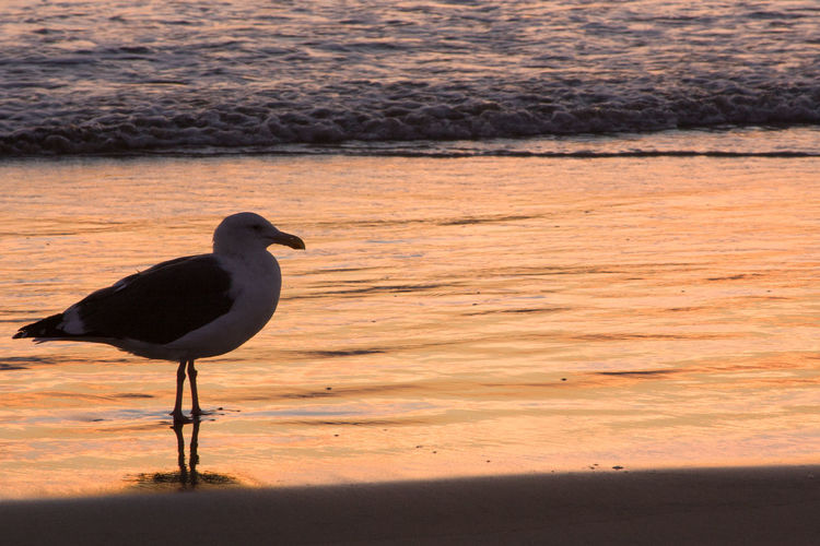Bird perching on sand at shore