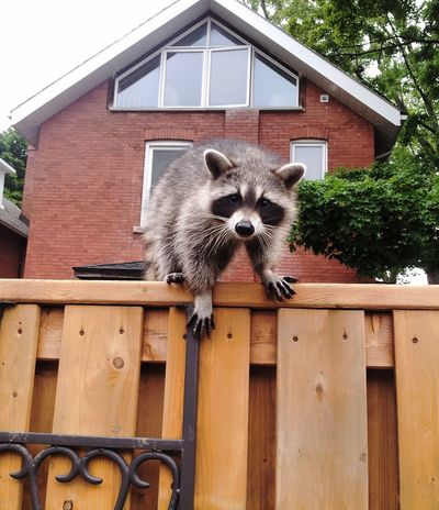 CuriousRacoon Closeup Fence In The City