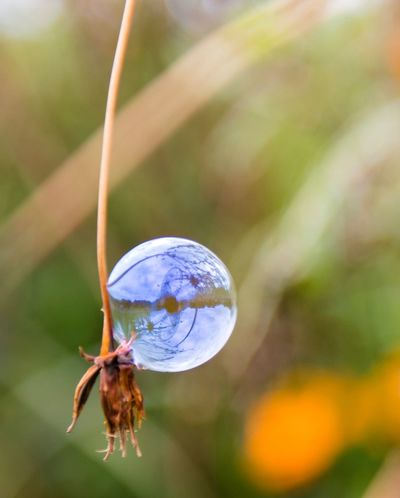 Close-up Focus On Foreground Animal Themes Animal Wildlife Invertebrate Insect Animal One Animal Animals In The Wild Nature No People Beauty In Nature Plant Day Outdoors Fragility Vulnerability  Reflection Animal Wing Selective Focus