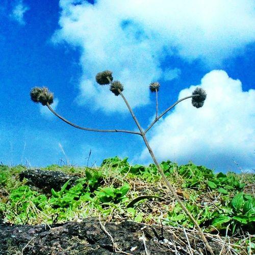 Basic fixes available on Instagram did the magic 😘 ✌ 💜! Cloud Sky Nature Landscape Picoftheday Green Anjaneri Nashik Nashikgram