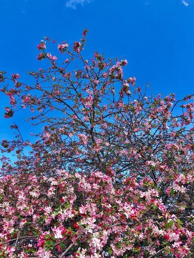 Hanging Out Hello World Enjoying Life Flower Trees Sky Beauty In Nature Life Fantastic