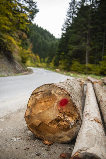 Close-up of log on road in forest