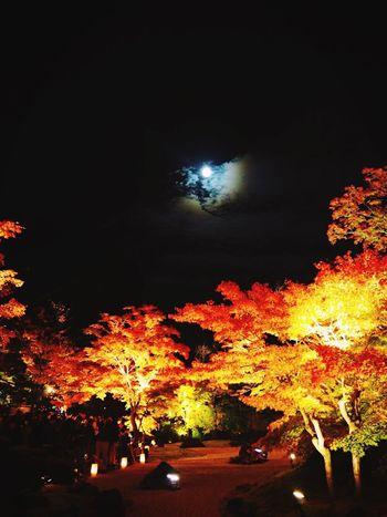 宮城県松島の円通院の紅葉です。 Night Moon Autumn Leaves