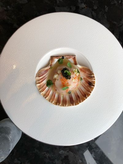 Scallops in there shell Freshness High Angle View Sweet Food