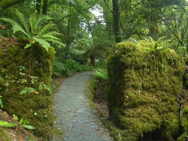 The enchanted wood Path Through The Woods Mossy Ferns Tree Fern Luxuriant Liss Ard West Cork Wildatlanticway Ireland
