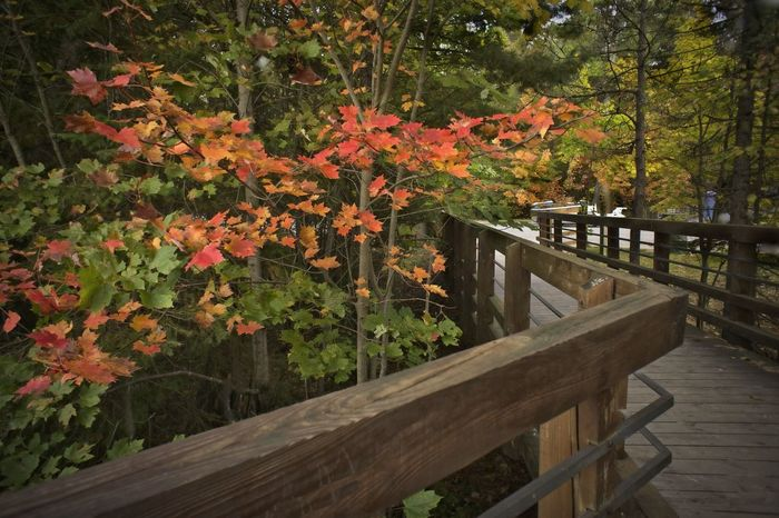 Autumn Colors Autumn Leaves Michigan, USA Intimate Landscape Outdoor Photography Pathway Railing Design Relaxing Time Scenic View Stroll