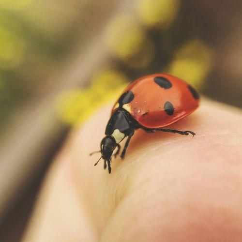 Ladybug Nature EyeEm Nature Lover Nature_collection Macro Macro_collection Macro Photography EyeEm Best Shots Eye4photography  EyeEm